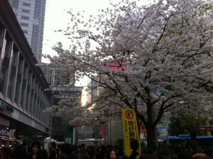 The cherry blossoms (sakura) are in full-bloom here in Tokyo!